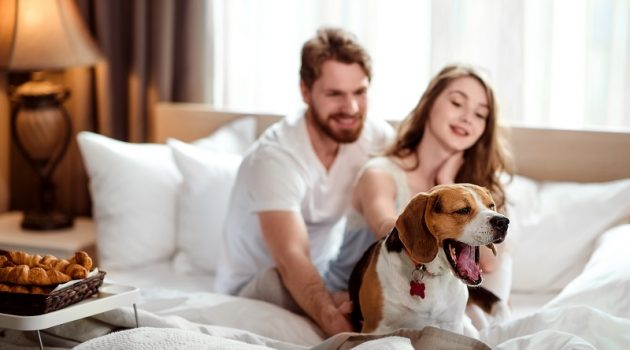 Funny dog yawns while sits in bed near hosts, satisfied with delicious breakfast. Happy female and make in background take care about their favourite pet. People, lifestyle and rest concept
