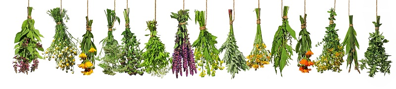 herbs to repel bugs