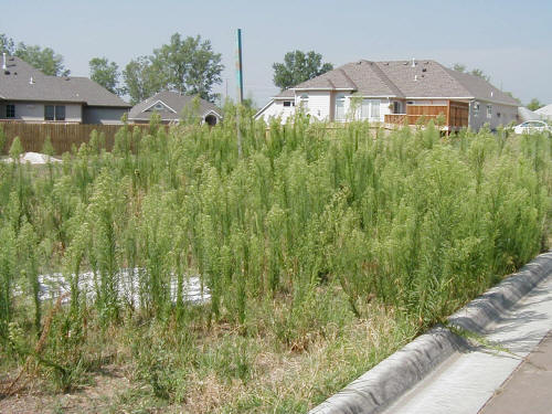 how to clear a large area off weeds