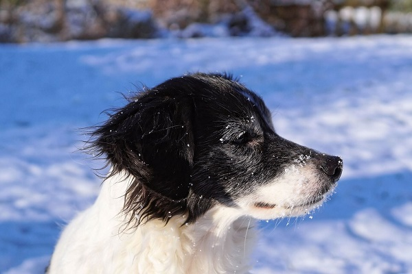 at what temperature should you bring your dog in