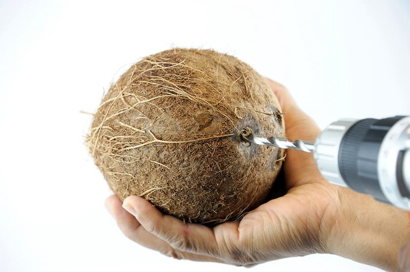 Drilling hole in coconut