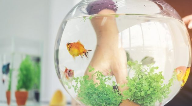 A woman's hand is decorating the aquarium in a fishbowl as a hobby.