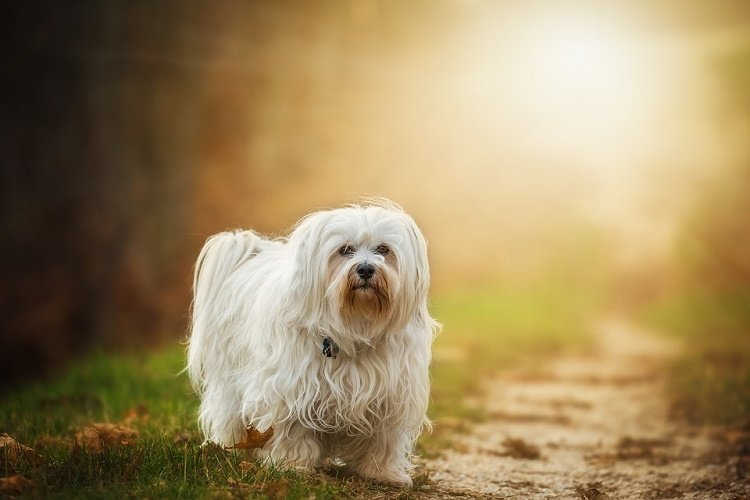 easy ways to soothe dog skin allergies