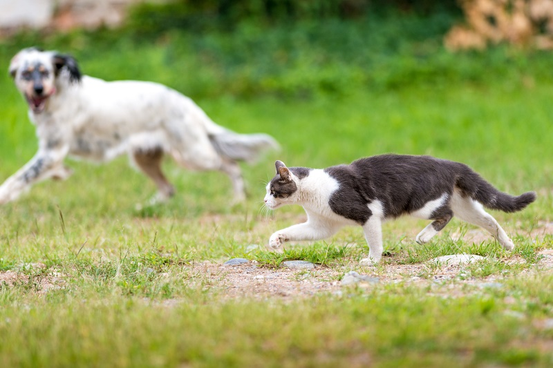 dog chasing cat away from the garden