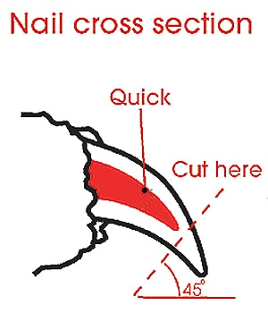 easy ways to clip your dog's nails