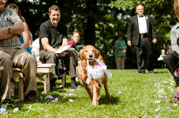 dogs as flower girls and ring bearers