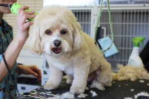 easy ways to do diy dog grooming
