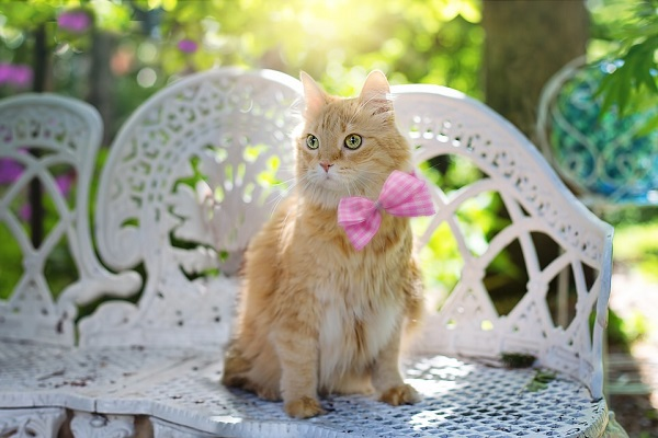 easy ways and home remedies to treat ringworm in kittens and cats