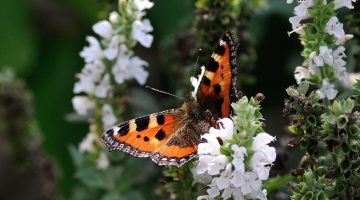 10 Easy Ways To Attract Butterflies To Your Garden