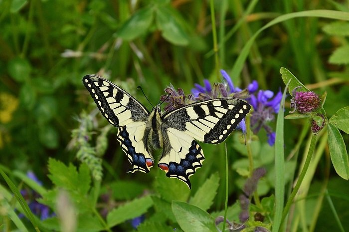 easy ways to attract butterflies to your garden