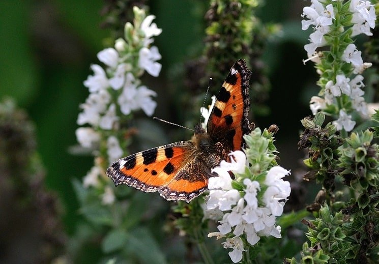 easy ways to attract butterflies