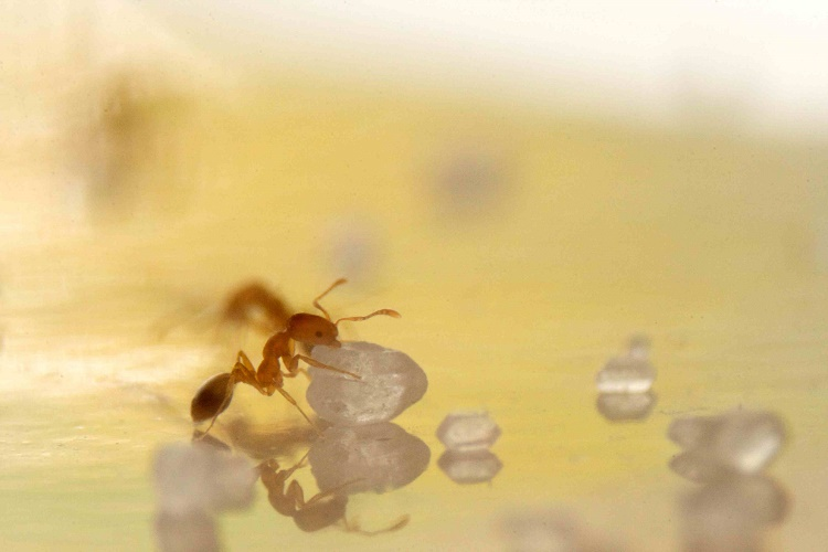 how to get rid of ants in the house fast