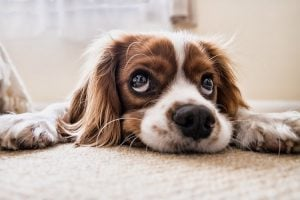 easy ways to get rid of pet urine stains and odors from carpet