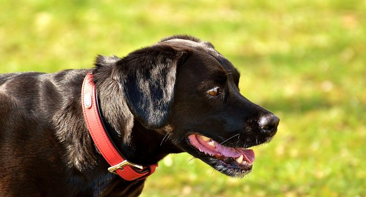 easy ways to give dog shinier healthier coat