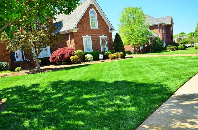 easy ways to grow thicker greener healthier lawn without weeds