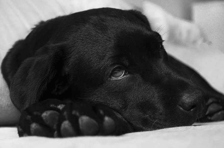 easy ways to prevent UTI in dogs