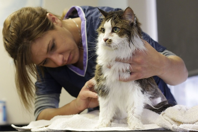 easy ways to remove pet hair