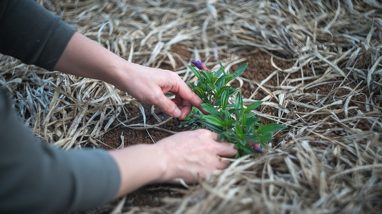 easy ways to remove weeds and clear them from an area