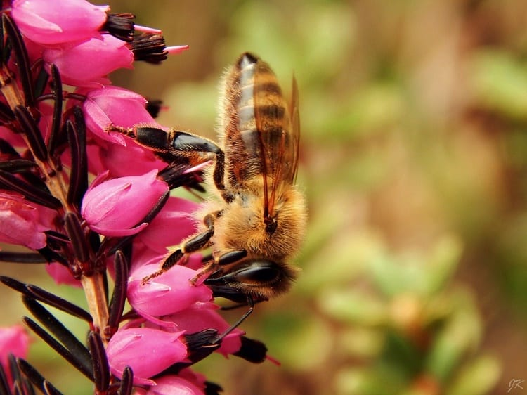 easy ways to save bees