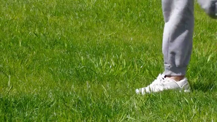 easy ways to save your grass from your dog pee
