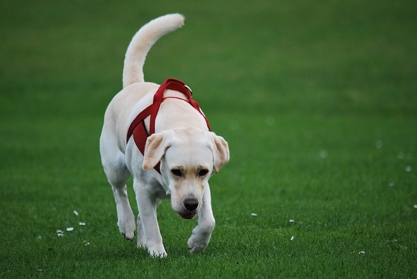easy ways to stop barking in dogs