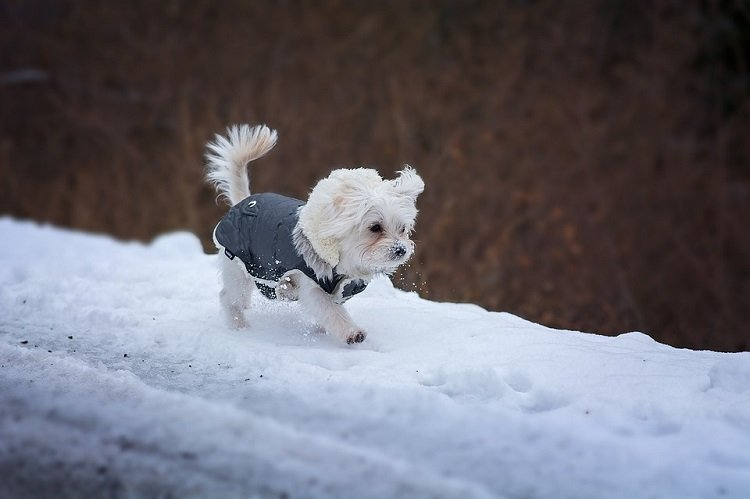 winter dog care tips ways to keep your dog healthy and safe in winters