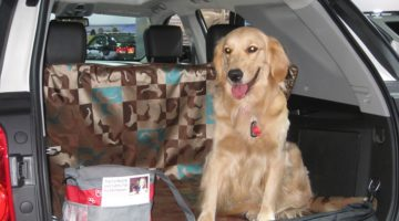 6 Easy Ways To Travel With A Pet