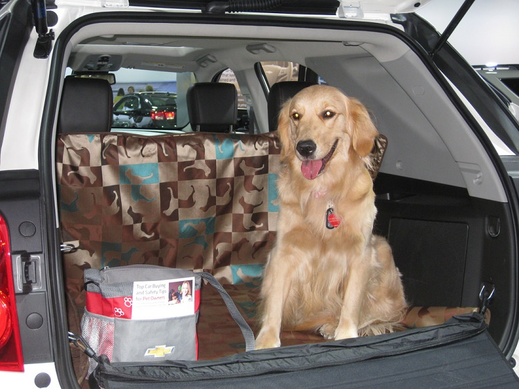 easy ways to travel with a pet