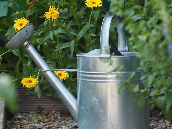 gardening tips and ways to prevent weeds