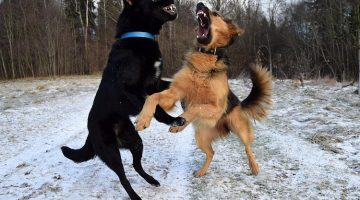11 Easy Ways To Break Up A Dog Fight