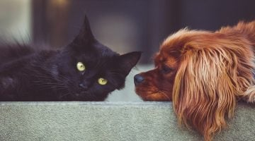12 Easy Ways To Deworm Dogs And Cats
