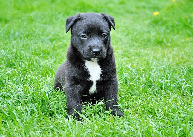 how to potty train a puppy with puppy pads