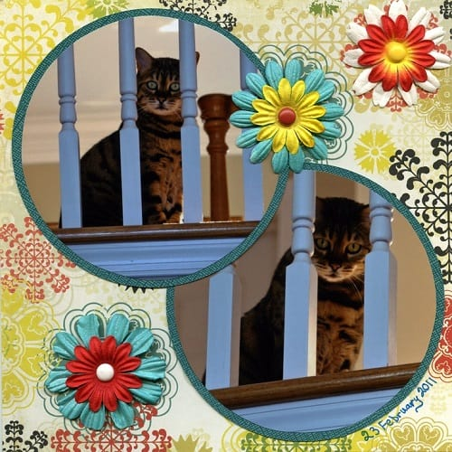 pet scrapbook ideas
