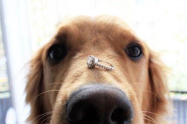 ways to include dog in dog themed wedding