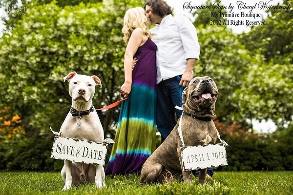 save the date with dogs ideas