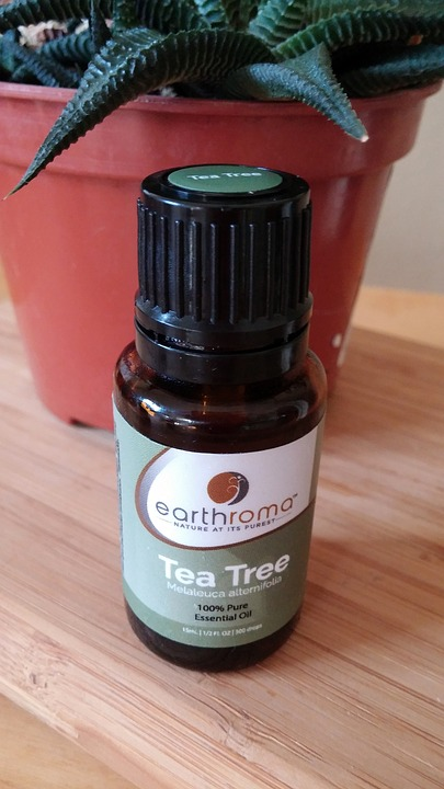 tea tree oil for ear infections treatment