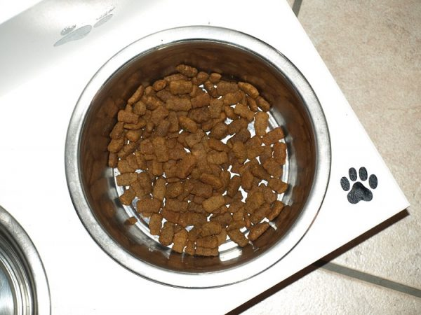 ways to get picky dog to eat dry dog food