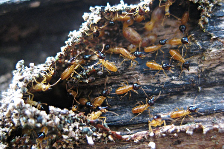 ways to get rid of termites