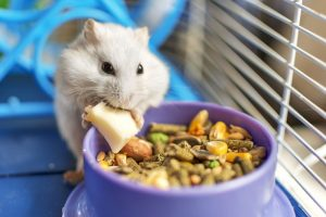 A hamster eating inside his cage.