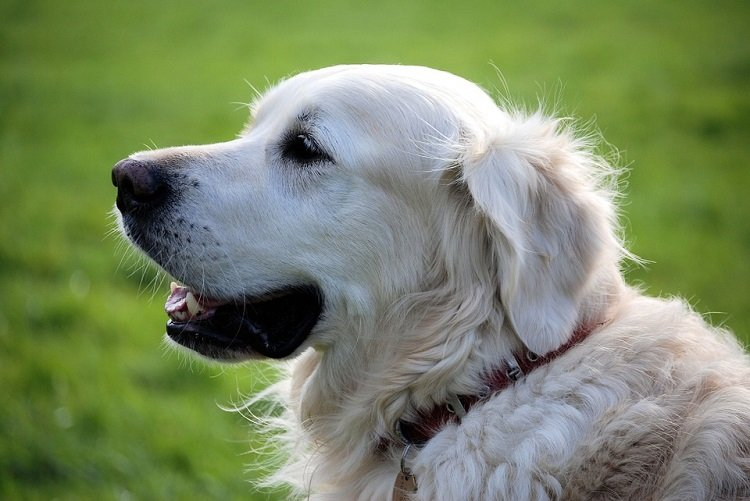 ways to memorialize a lost pet