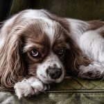 12 Easy Ways To Tell If Your Dog Is Depressed And What You Can Do About It