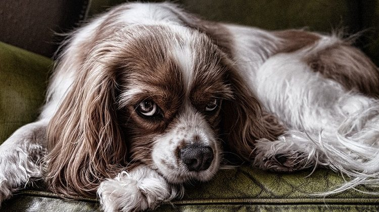 ways to tell if my dog is depressed