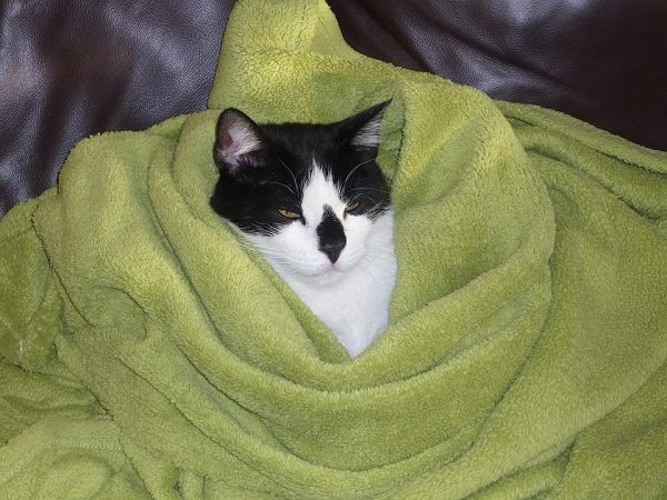 winter care tips for pets